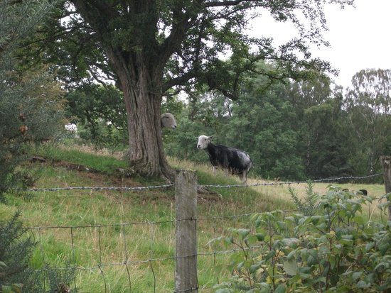 Herdwick Guest House: Ewe wont be disappointed by the Herdwick