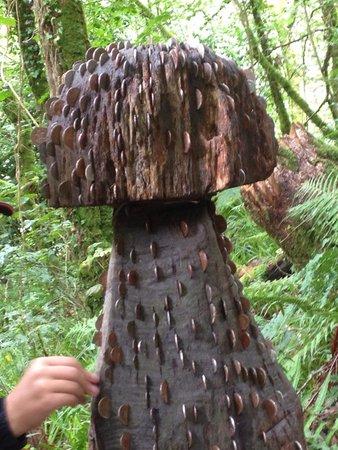 Lydford Gorge: Money mushroom