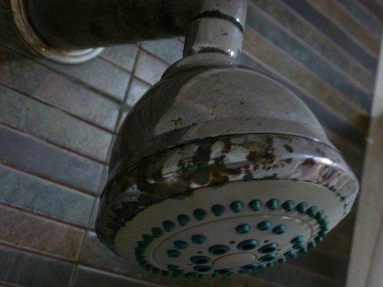 Hotel Clarks Shiraz : Alcachfa ducha (Hab. 226)