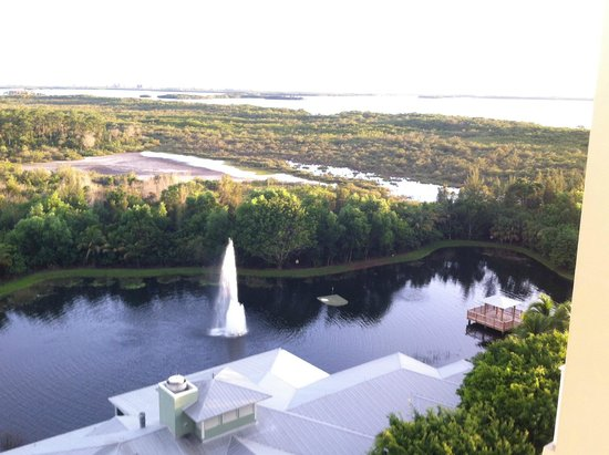 Hyatt Regency Coconut Point Resort & Spa: Wälder