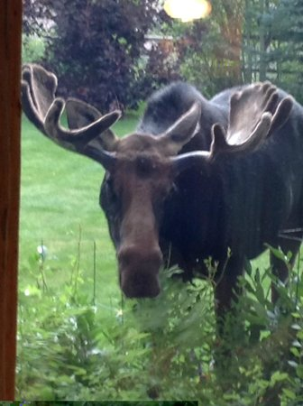 Wildflower Lodge at Jackson Hole: Giving me a close up shot!