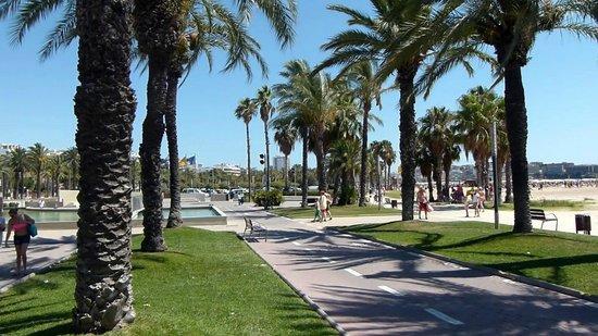 Avenida Jaume I: General View