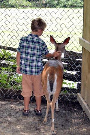 "Magnolia Plantation & Gardens: Grandson gently patting ""Gracie"""