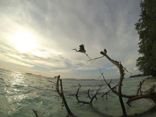 Biyadhoo Island Resort : Un beau matin ....