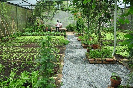 Sonya's Secret Garden: Organic vegetable garden; source of veggies served