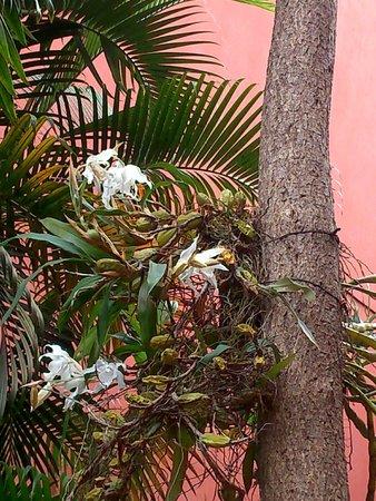 orchideen im garten photo de chez aina antananarivo. Black Bedroom Furniture Sets. Home Design Ideas