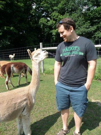 Backroad Discovery Tours: Alpaca farm