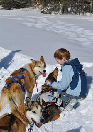 Muddy Paw Sled Dog Kennel Nh
