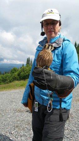 Station Mont Tremblant : Birds Show