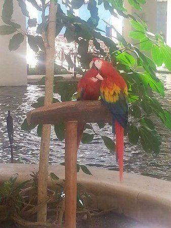 Occidental Grand Xcaret All Inclusive Resort: birds they are all around the resort