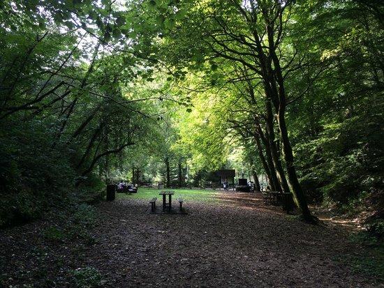 Orto Botanico delle Conifere