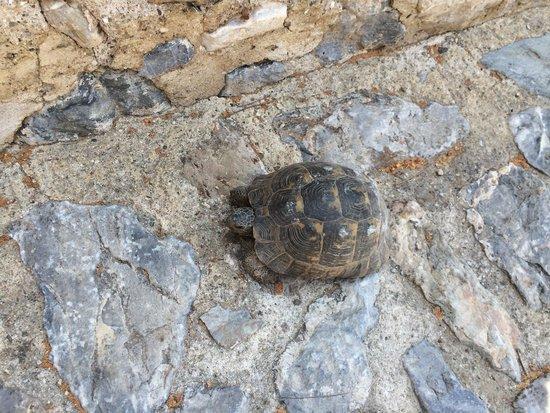 Hotel Bella: Tortoise