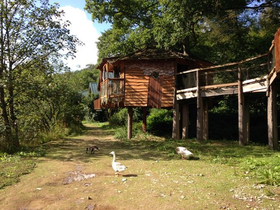 Forest Holidays Deerpark, Cornwall: Treehouse