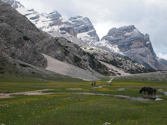 """Alpe di Fanes: """"Le Gran Plan"""" tra la Capanna Alpina e la Malga Gran Fanes"""