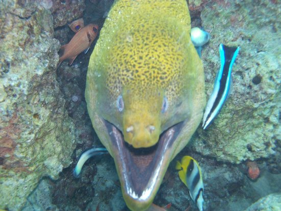Reef Discovery: Eel