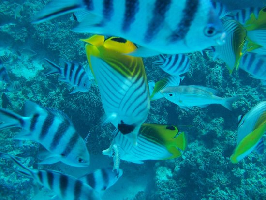 Reef Discovery: FIsh