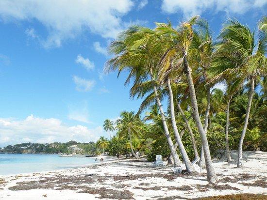 Club Med La Caravelle : Palme in spiaggia