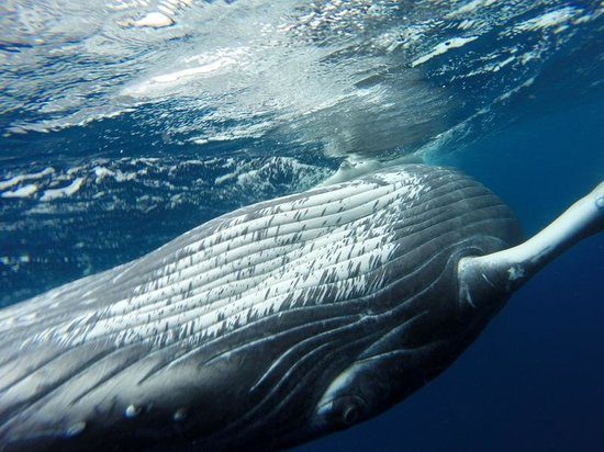 Whales in the Wild: Checking us out