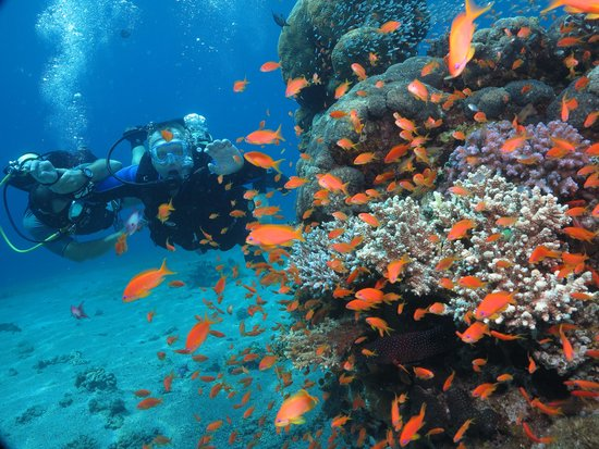 Snuba Dive Resort: m 6 meter rock at snuba dive center
