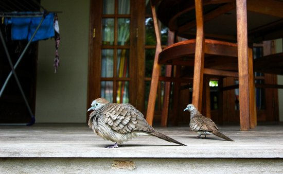 Cote d'Or Chalets: A lot of different kinds of birds in The Seychelles