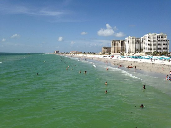 Florida Dolphin Tours - Day Tours : Clear water