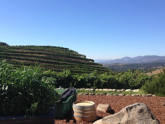 A Limo Excursion & Wine Tours: View from Porter Family Vineyards