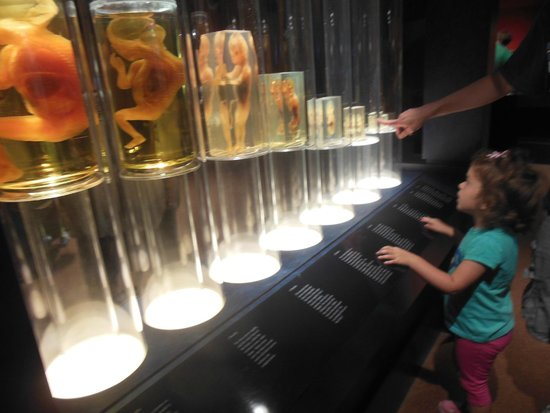 Center of Science and Industry (COSI): checking out human development