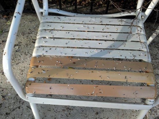 La Quinta Inn Austin Oltorf: bird poop on pool chair