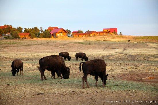 Zion Mountain Ranch : Near Smores