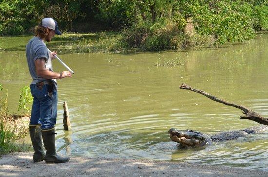 Kliebert's Turtle & Alligator Farm: Feeding the gators