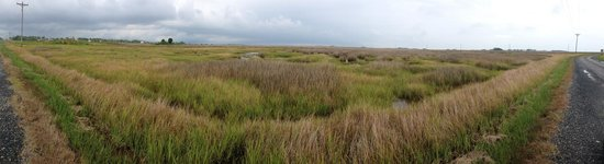 Smith Island Inn: The endless salt marshes are a rare unspoiled beauty.