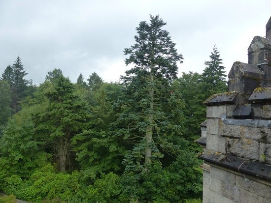 Inverlochy Castle Hotel: View from our room