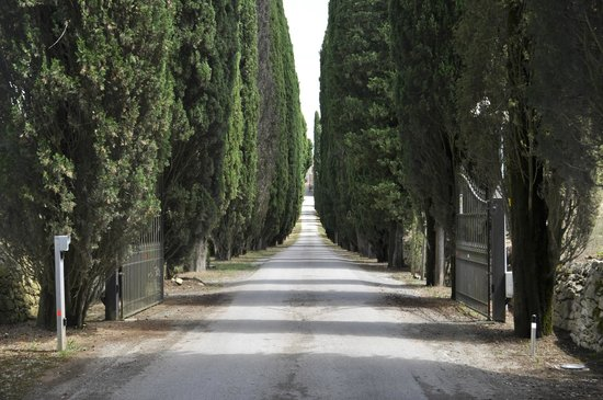 Borgo Scopeto Relais: Beautiful driveway up to the hotel