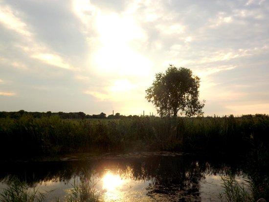 Quanicassee Wildlife Area