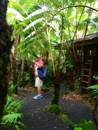 Volcano Rainforest Retreat: just outside cabin