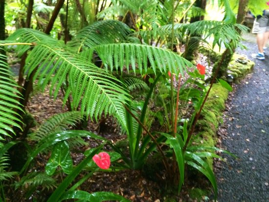 Volcano Rainforest Retreat : pathway to cabin