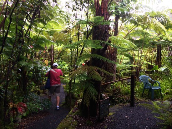 Volcano Rainforest Retreat : path to cabin