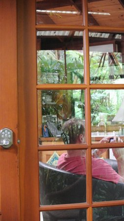 Volcano Rainforest Retreat: view outside from cabin