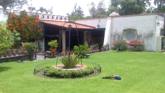 Museo Dolores Olmedo Patino: Gardens