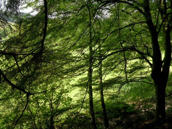 Grizedale Forest : Uplifting atmosphere