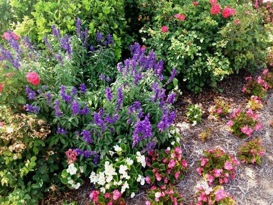 شاتوه أون ذا ليك ريزورت سبا آند كونفنشن: some of the beautiful flowers planted on the grounds