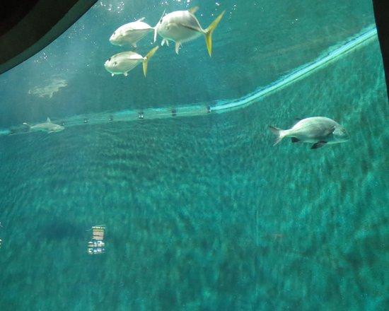 National Mississippi River Museum & Aquarium: River boat