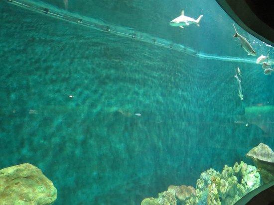 National Mississippi River Museum & Aquarium: Large aquarium