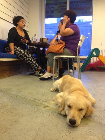 Puppy Spoon : Sunny is quietly listenning the conversation