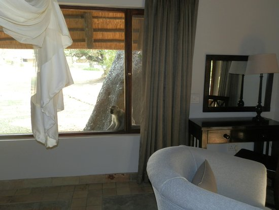 Inyati Game Lodge, Sabi Sand Reserve : A monkey at our window who is waiting for us to let our guard down and leave something unlocked!
