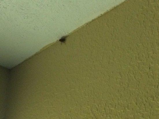 Hotel Blue: Bugs!!!!!!