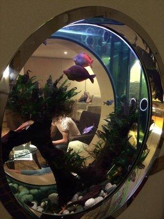 Hilton London Gatwick Airport: The porthole fish tank at the 4th floor executive lounge