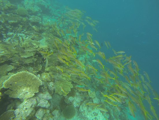 Cocoa Island by COMO: House reef (taken using the rental GoPro camera)