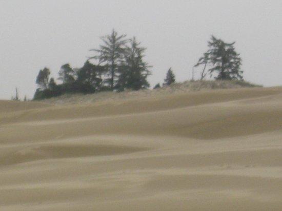 John Dellenback Dunes Trail : John Dellenback Trail Dunes