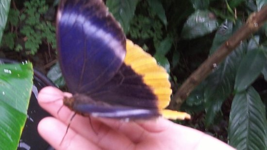 duPlooy's Jungle Lodge: Greenhill Butterfly Ranch